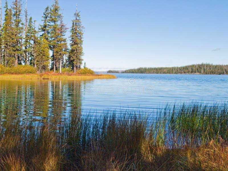 Lac bleu de montagne avec des arbres et des herbes images stock