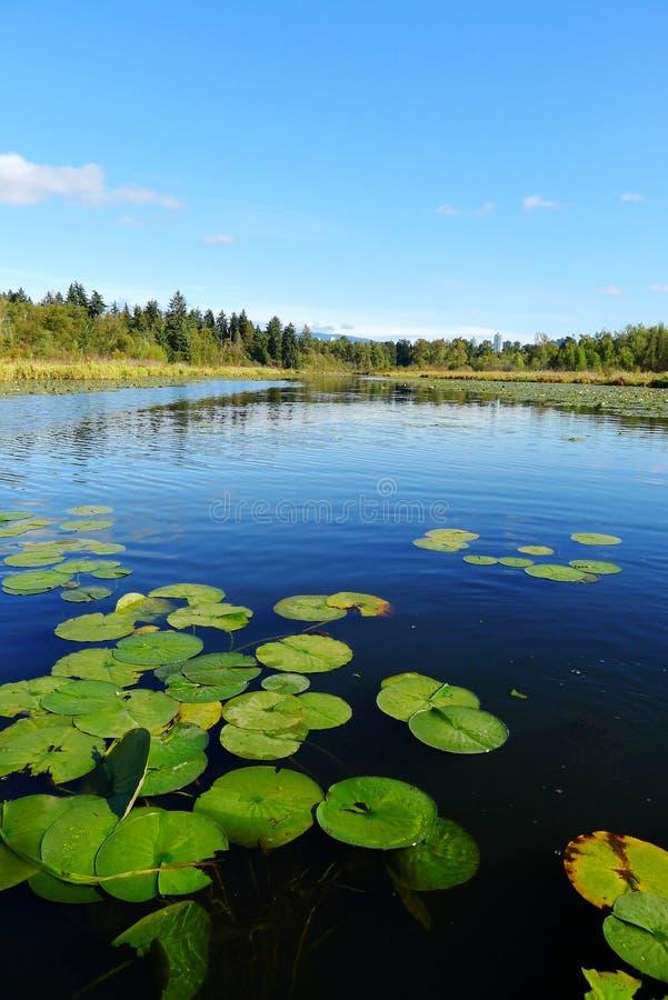 Lac Burnaby en été image stock