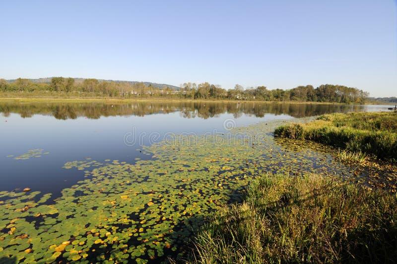 Lac Burnaby en automne image libre de droits