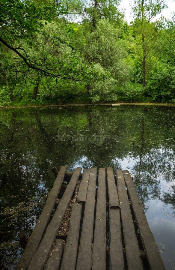 Lac caché dans la forêt sauvage photo stock