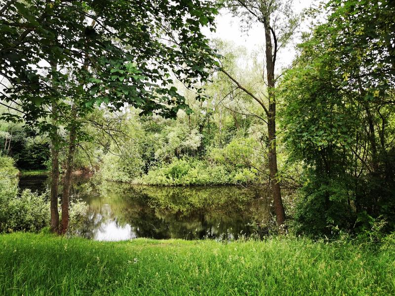 Lac caché dans le forrest photos stock