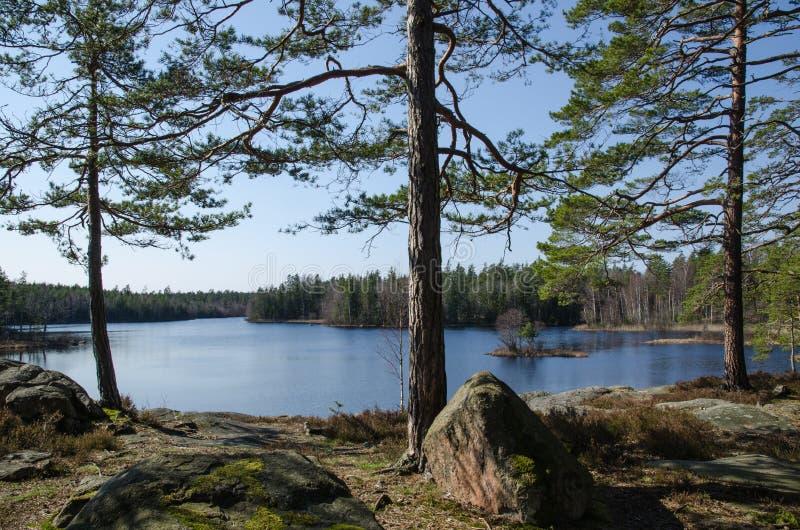 Lac calme dans les régions boisées image stock