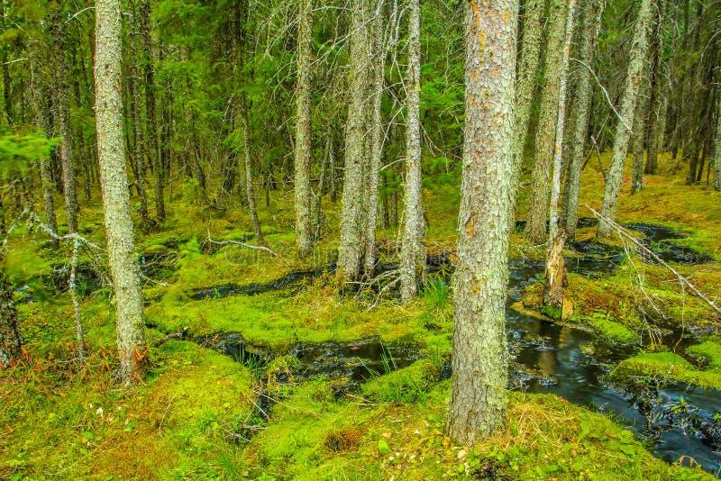 Lac clair, parc national de monte de montagne, Manitoba, Canada images stock