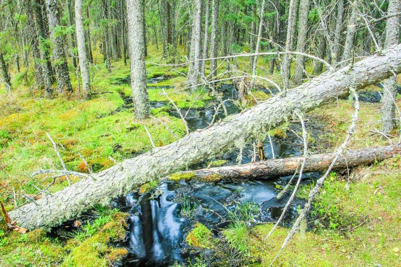 Lac clair, parc national de monte de montagne, Manitoba, Canada photo libre de droits