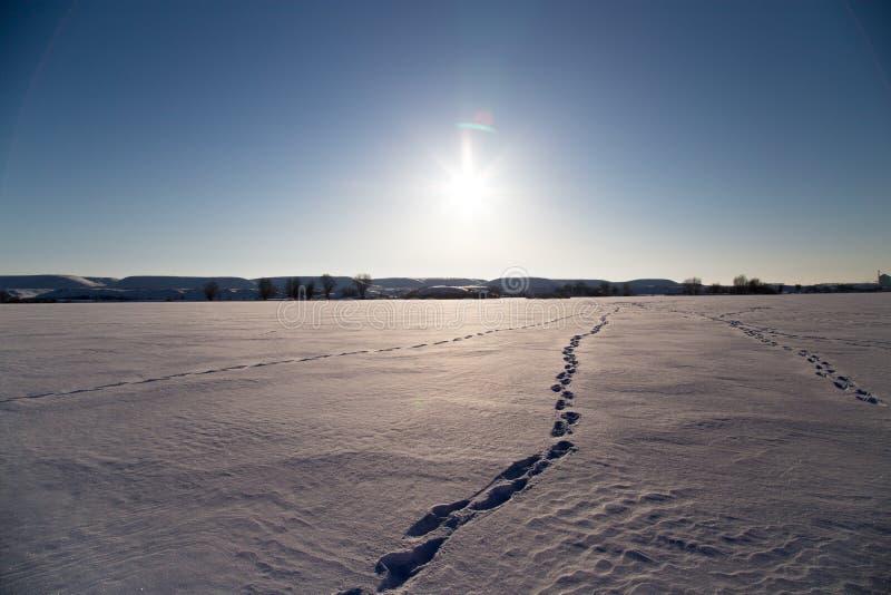 Lac congelé en nature d'hiver images stock