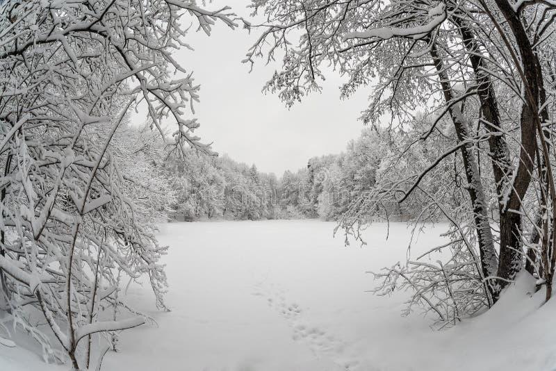 Lac congelé entouré par la forêt couverte de neige photo libre de droits