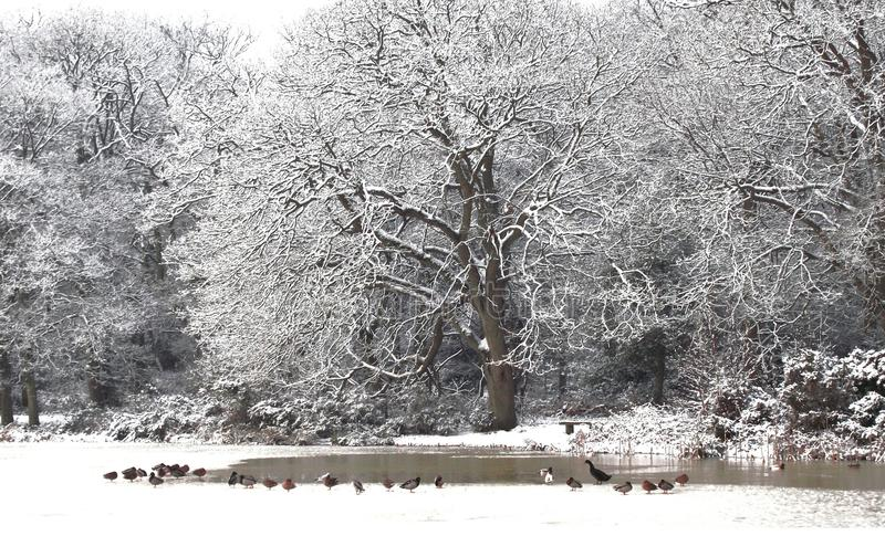 Lac congelé un spectacle familier au beau milieu de l'hiver images stock
