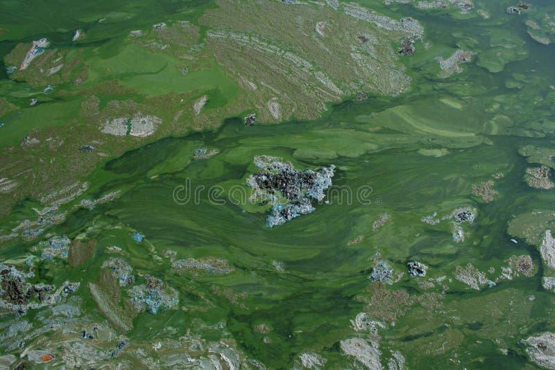 Lac couvert d'algues image stock