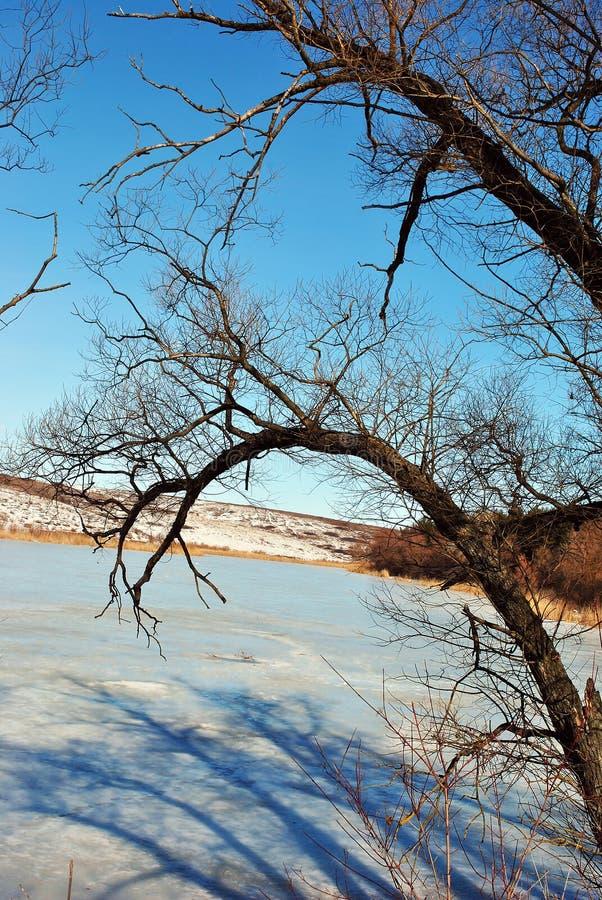 Lac couvert de neige, saules sans feuilles fin le long, de branche et d'ombre, paysage d'hiver, ciel bleu image stock