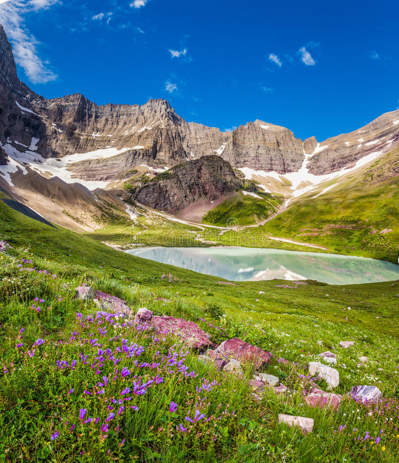 Lac cracker et lis sauvages en parc national de glacier, Montana photographie stock