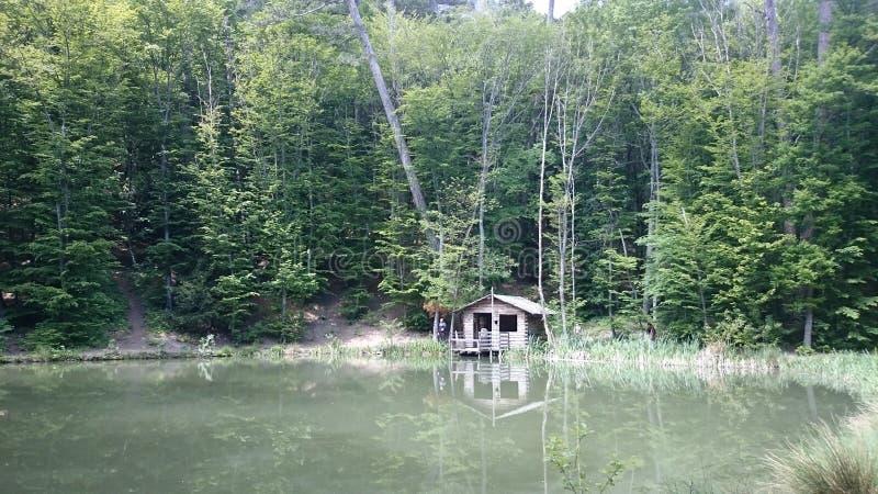 Lac dans la forêt image libre de droits