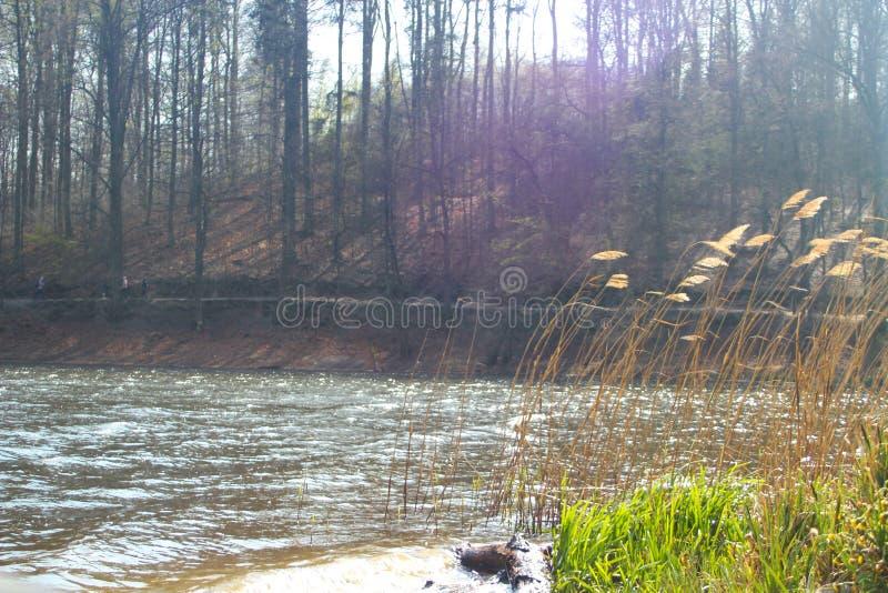 Lac dans la forêt avec l'herbe lentement de roulement photo stock