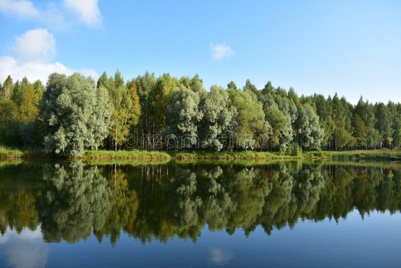 Lac dans la forêt Parc avec des plantations décoratives d'arbres exotiques branches secoue le vent, l'eau reflète le ciel des nua photos stock