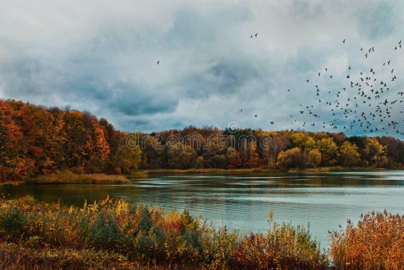 Lac dans la région de Lviv photos libres de droits