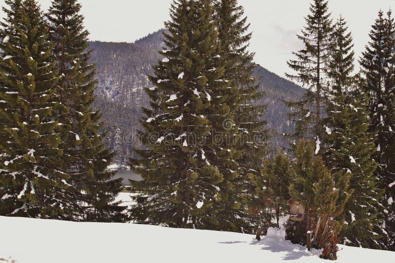 Lac dans les Alpes photo libre de droits