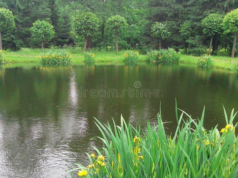 Lac dans une forêt image libre de droits