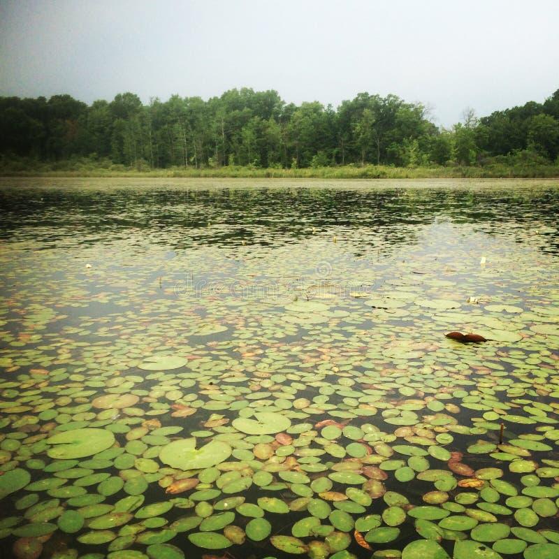 Lac de coverd de Lily Pad image libre de droits