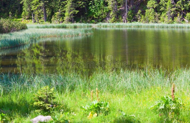 Lac de forêt de montagne d'été image stock