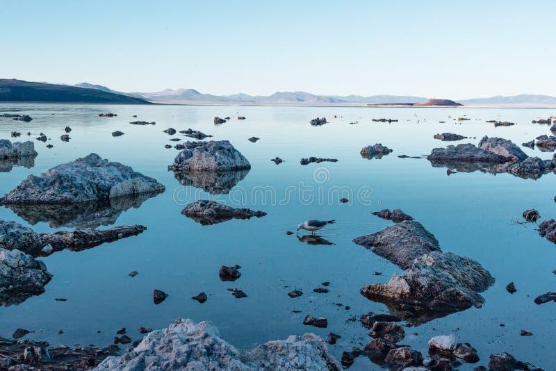 lac de la Californie mono Heures bleues, crépuscule images libres de droits