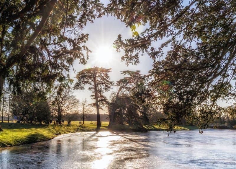 Lac du ` s de parc de Croome et conifères, Worcestershire, Angleterre photos stock
