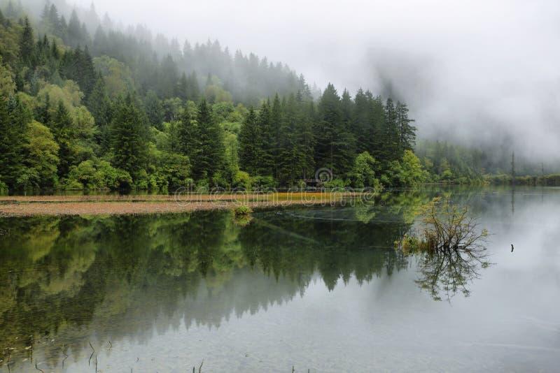 Lac en bambou i arrow dans Jiuzhaigou, Chine, Asie images libres de droits