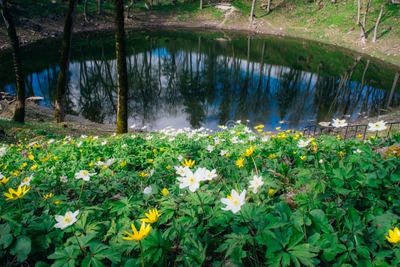 Lac en cratère de météorite de Kaali par printemps, Saaremaa photo stock