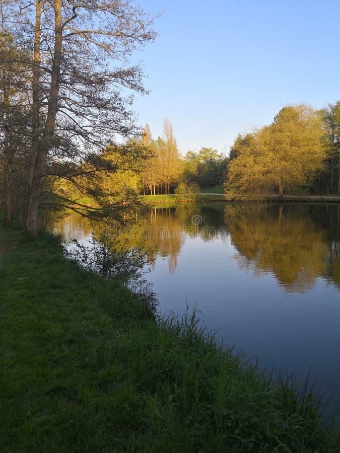 Lac et arbre photo stock