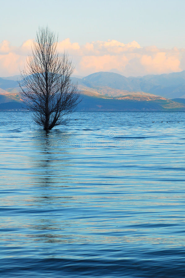 Lac et arbre bleus photographie stock libre de droits