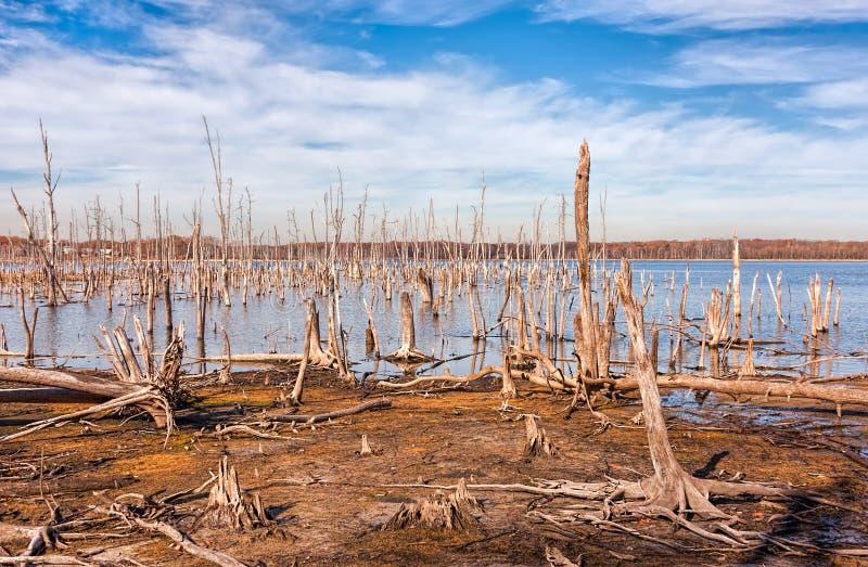 Lac et arbres morts photos stock