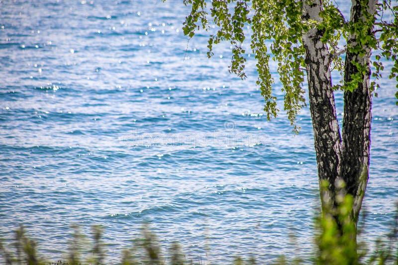Lac et bouleau sur le rivage photos libres de droits