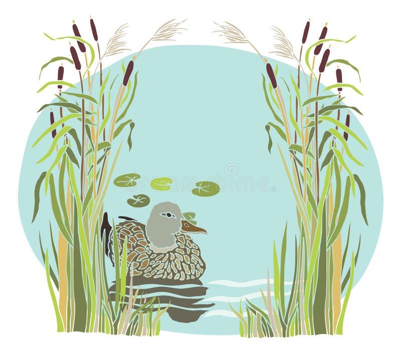 Lac et canard dans les roseaux illustration de vecteur - Illustration canard ...