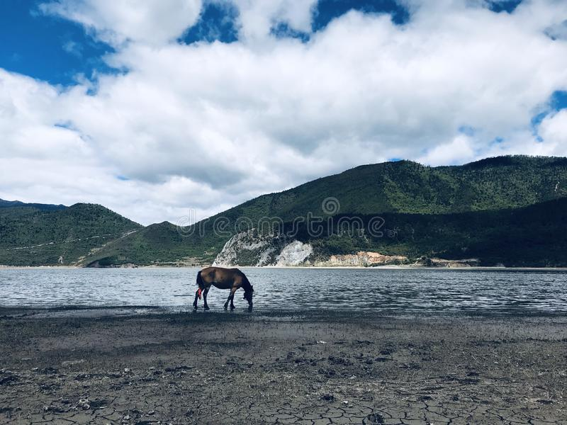 Lac et cheval photographie stock