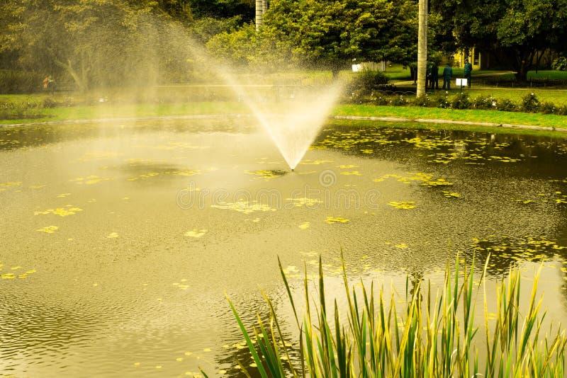 Lac et fontaine en parc photos libres de droits
