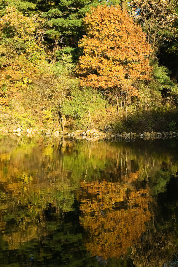 Lac et forêt d'automne images stock