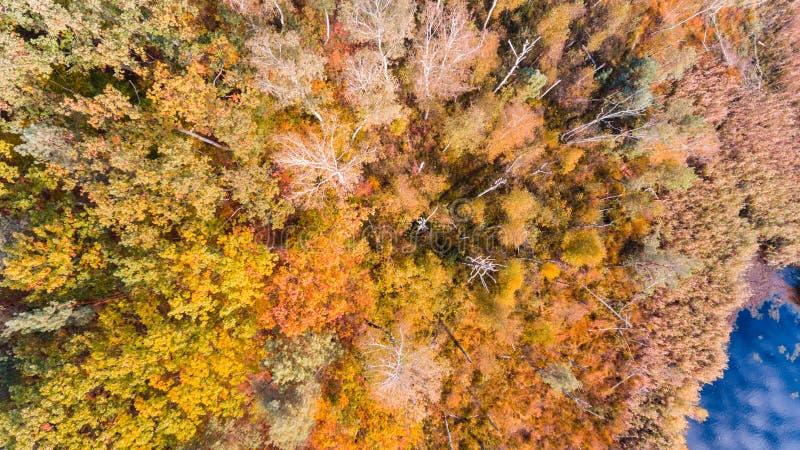 Lac et forêt d'automne avec les feuilles colorées, vue aérienne de bourdon photos libres de droits