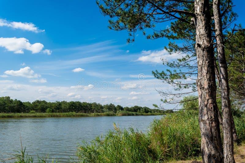 Lac forêt de pin image stock