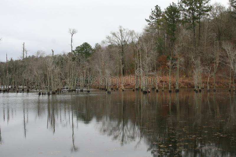 Lac Forest In Alabama 2019 winter II photo stock