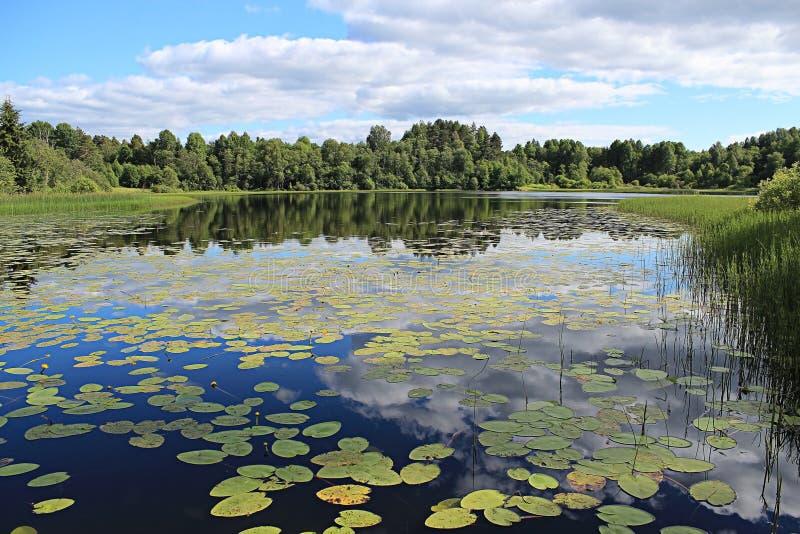Lac forest avec des nénuphars image stock
