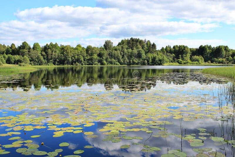 Lac forest avec des nénuphars photographie stock