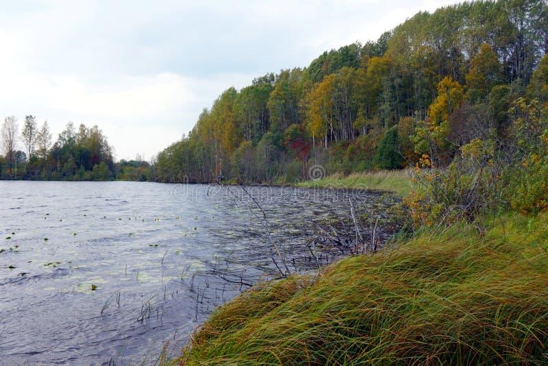 Lac forest avec les rivages herbeux en automne image libre de droits