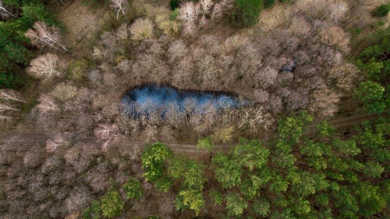 Lac forest d'une vue de primevère farineuse images libres de droits