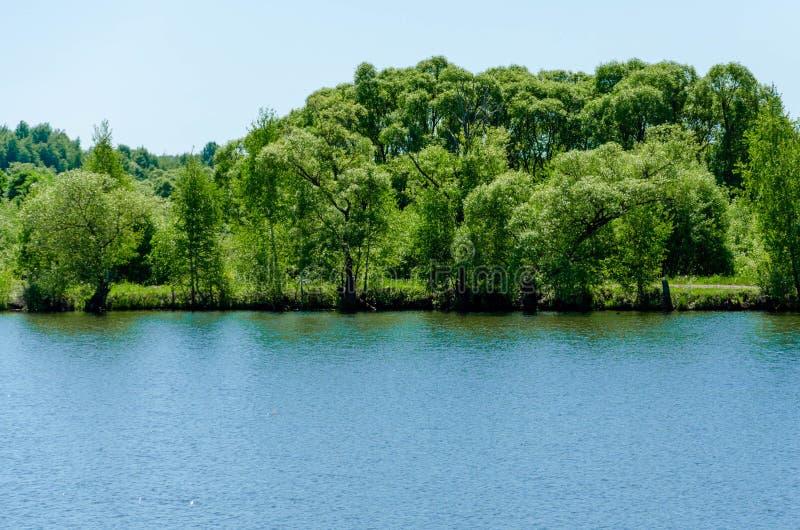 Lac forest dans la vue d'?t?, paysage photographie stock