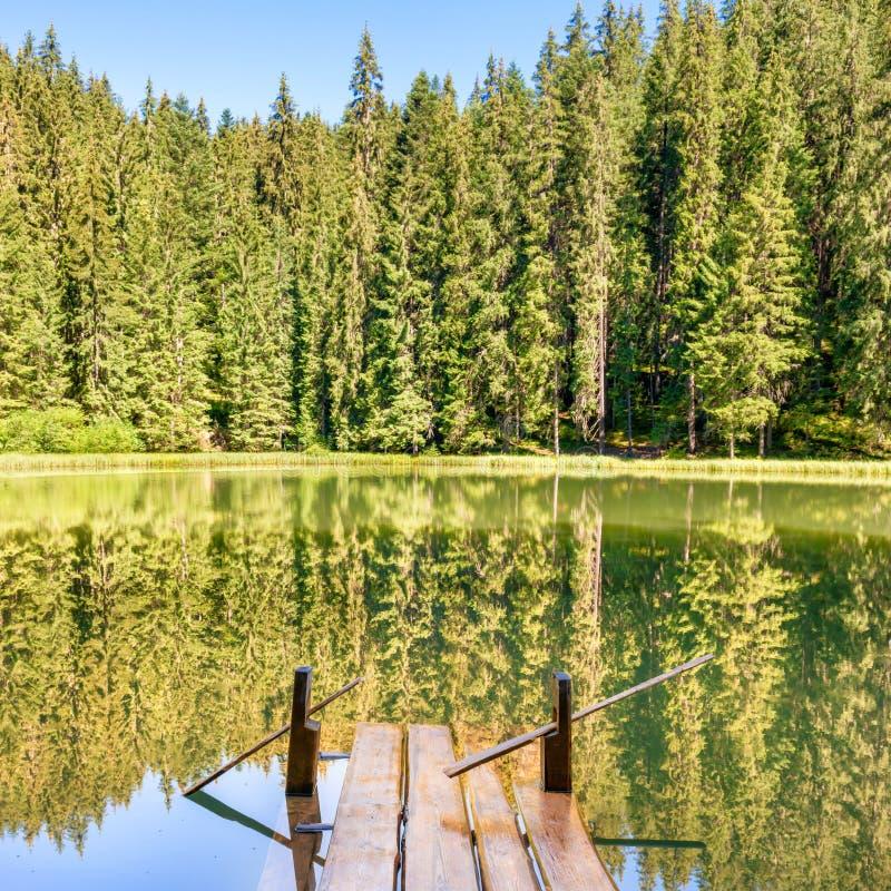 Lac forest dans les montagnes photo libre de droits
