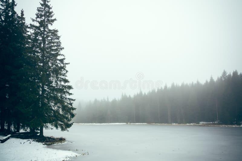 Lac forest en brouillard III images libres de droits