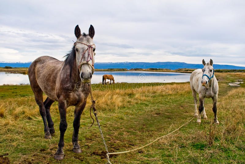 Lac horse photo libre de droits