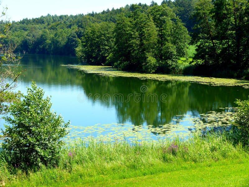 Lac idyllique avec des roseaux et forêt sur le rivage et avec des protections de lis en Allemagne du sud photo stock