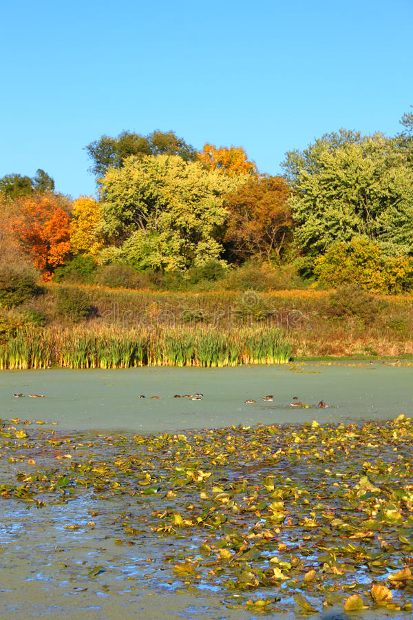 Lac l'Illinois du nord Olson images stock