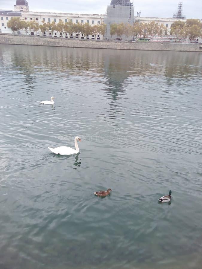 Lac le Rhône Lyon image stock