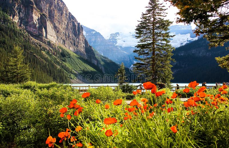 Lac Louise In Full Summer Bloom photos stock