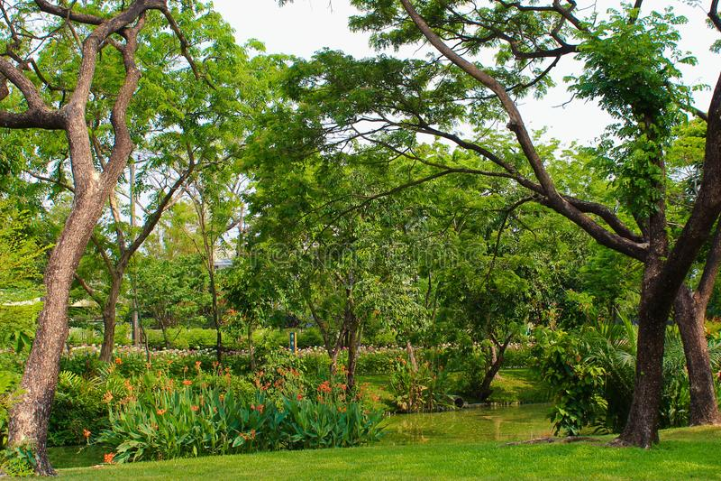 Lac Lumpini au parc de Lumpini, Thaïlande images stock